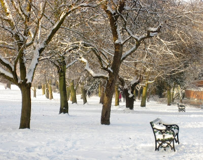 Snowy trees and bench