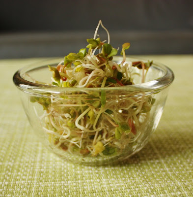 Oppskrift Bønnespirer Hjemme Reddik Spirer Radish Bean Sprouts