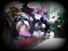 My Babies!