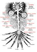 Arbor Sephiroticum