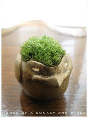 sinajinaの苔盆栽