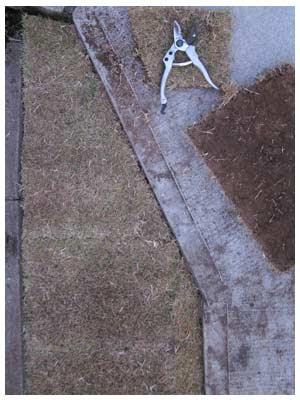 芝生を敷く