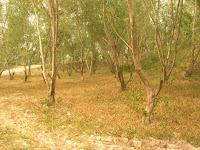 tanah yang gersang