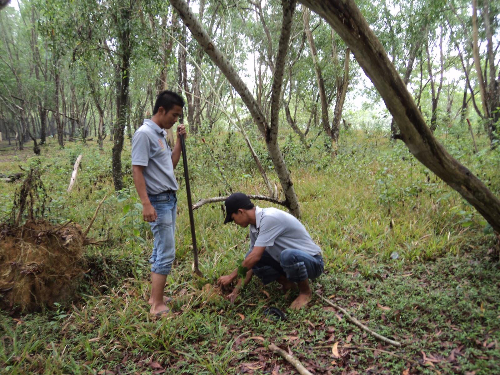 Penanaman bibit pohon pelindung