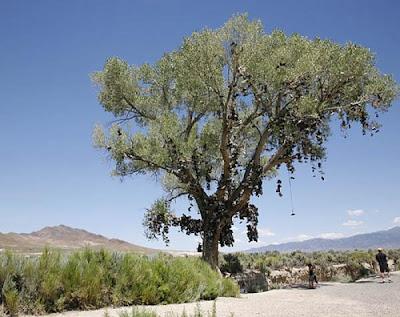 http://3.bp.blogspot.com/_Miv3T60Zq1M/S7hBVRmfTDI/AAAAAAAAJxk/hiz2P3wFmuM/s1600/shoe-tree-of-middlegate.3095.full.jpg
