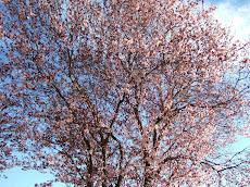Aroma de primavera