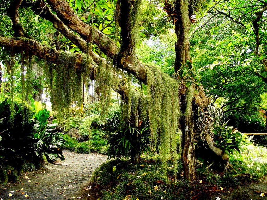 Floresta Ranjico 7812floresta
