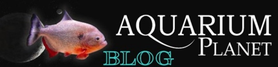 Aquarium Planet Blogs