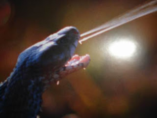 Algo del cuerpo humano Cobraescupidora