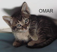 Omar - o gatinho boa gente