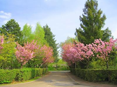 Petit patch smaranda printemps giffois jardin fleuri - Idee petit jardin fleuri brest ...