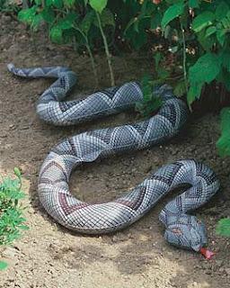 Snake In Your Garden