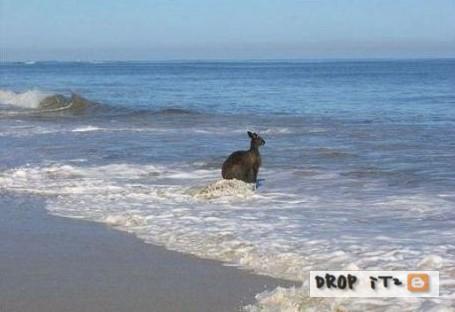 http://3.bp.blogspot.com/_Msub-1hLuSk/TNMHFs1RfrI/AAAAAAAACP8/5sUSA0E_EHg/s1600/BIG+GRREN+Kangaroos+KILL+%286%29.jpg