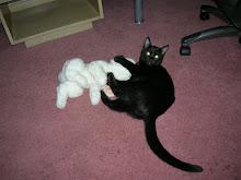 Jinx The Cat