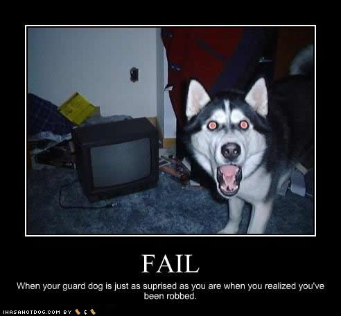 funny dog wallpaper. funny dog wallpaper. images