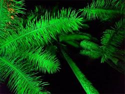 Rio que te quero verde...