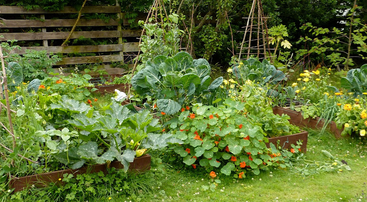 Home raised vegetable garden - To Grow Fresh Organic Fruit And Vegetables In Your Own Back Garden