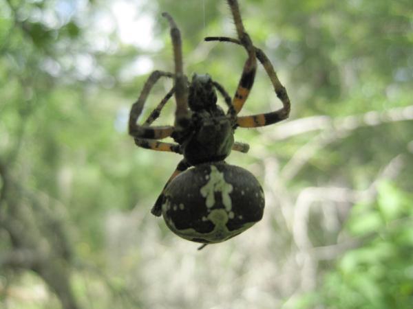 BBES-spiders.jpg
