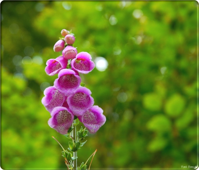 Natural beauty flowers wallpapers