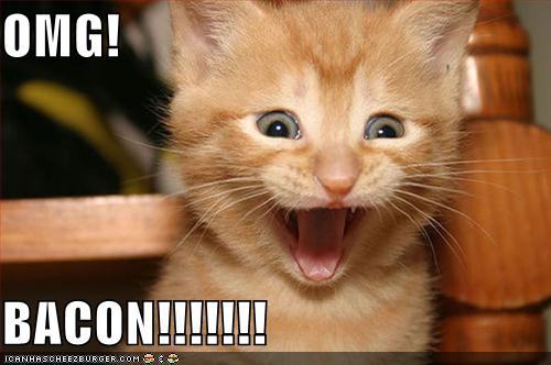 Just for the fun of it! Funny-pictures-kitten-is-excited-about-bacon