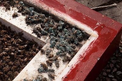 Mögel och döda bin på botten