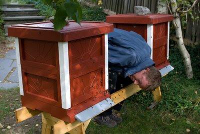 Jag vid bikuporna