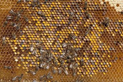 Pollen i vaxkaka