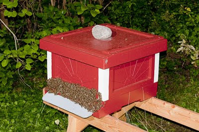 Flustret kryllar av bin