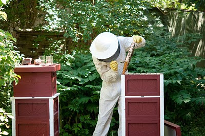 Provtagning av honung i bigården