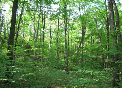 Photograph by Kerry Kelly (2006): Beech-Maple Forest on Pierce Stocking Drive