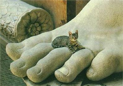 El gato grecolatino