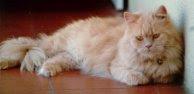 Mis gatos: mi primera gata, una auténtica princesa