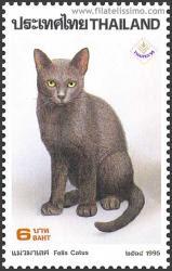 Korat o Si-Sawat, el gato de la buena suerte