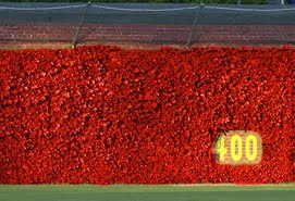 Image result for images of wrigley field ivy wall