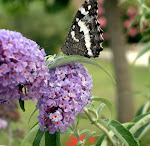 La liberté du papillon