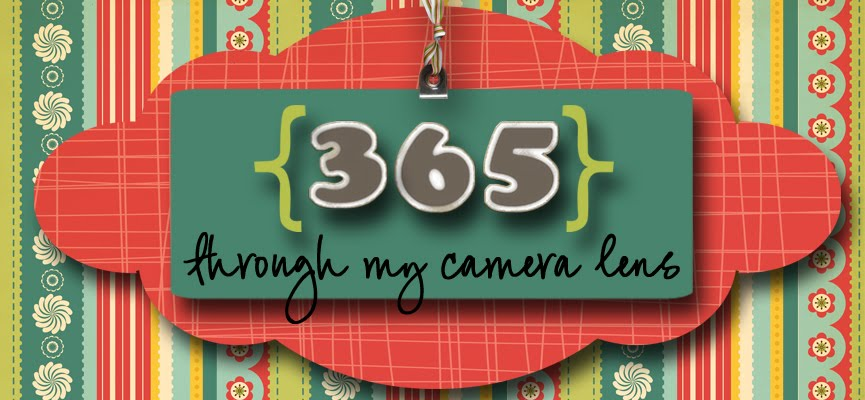 365 Through My Camera Lens