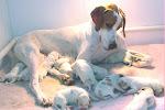 Corwyn Puppies