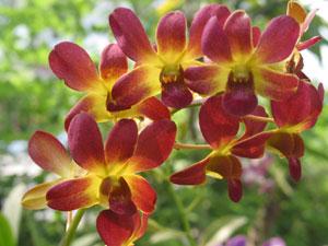 Warna dan Makna Jenis Bunga