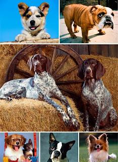 Фотообои с собаками для рабочего стола 1600 х 1200