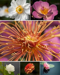 Высококачественный клипарт Цветы