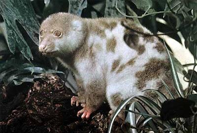 Hewan Langka Di Indonesia Daftar Nama Binatang Langka Yang Dilindungi