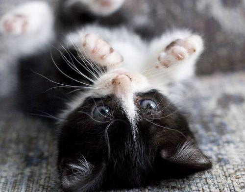 Mod The Sims - Cute Kittens