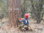 Tree Felling & Removal Services