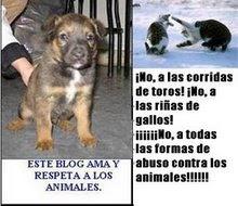 Este blog ama e tem respeito por todos os animais.