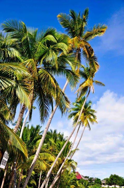 Alona Tropical Resort Room Rates