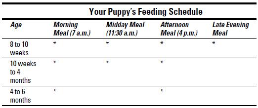 Getting My Dog On A Eating Schedule