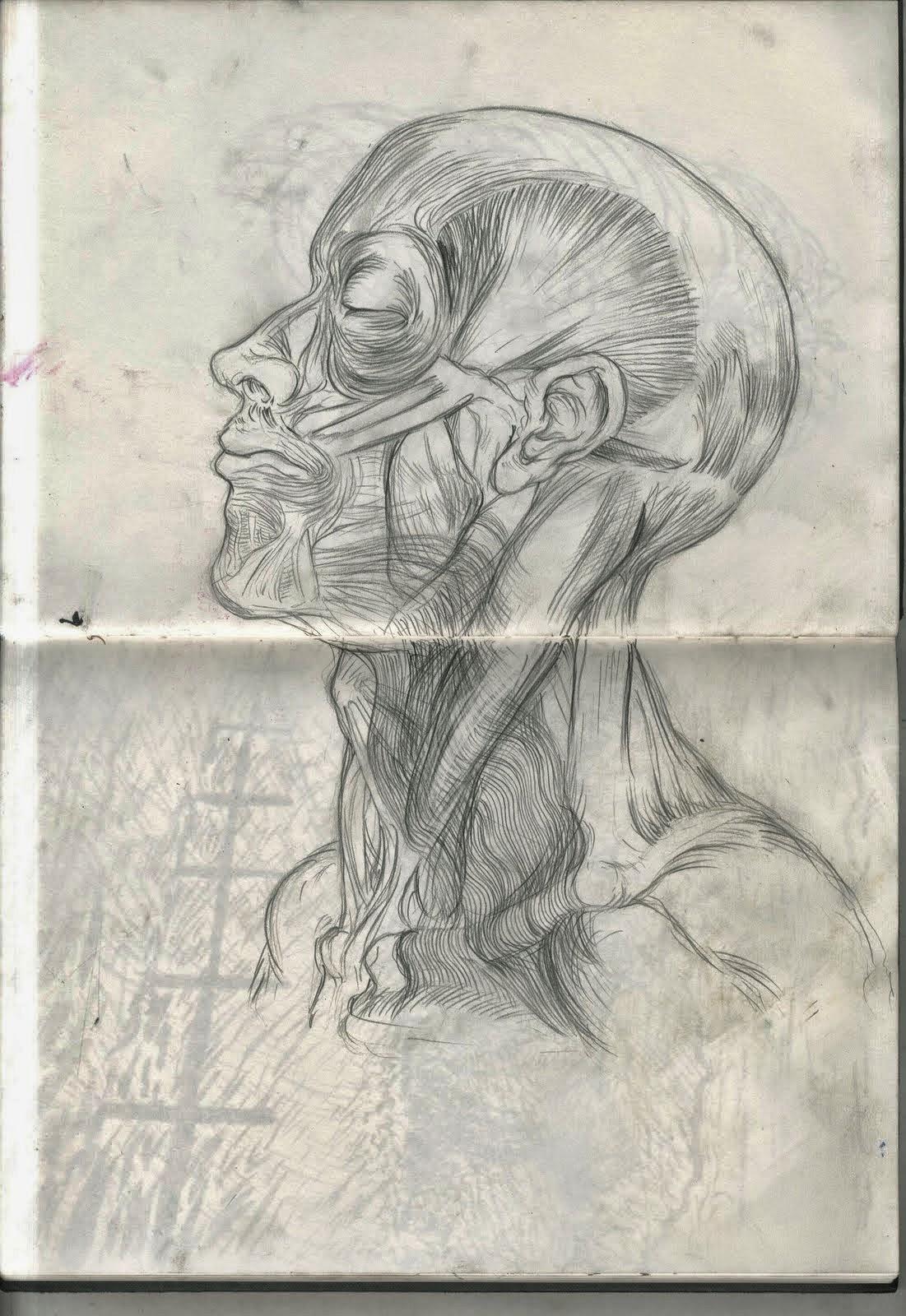 Sarah Simblet Anatomy For The Artist Choice Image - human body anatomy