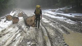 Pe drum forestier inainte