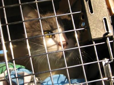 cat eyes house. Cat Eyes---A Cat Woman#39;s