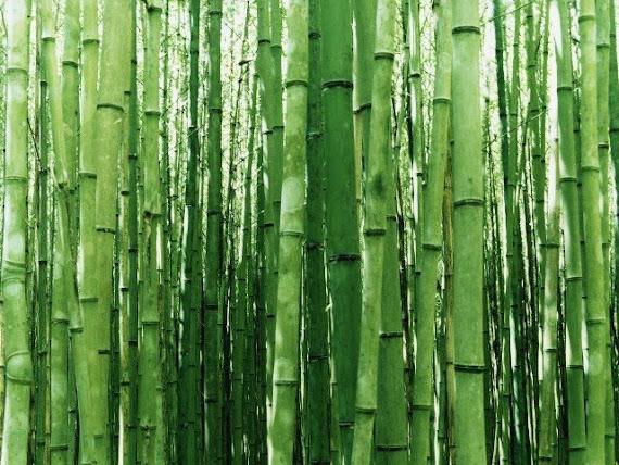 Bamboo Listens